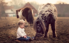 Picture nature, boy, pony