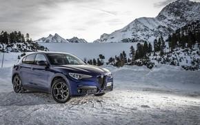 Picture snow, Alfa Romeo, 2019-20, Stelvio Sprint