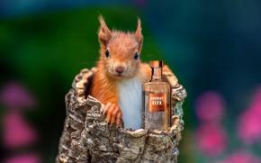 Picture humor, the trick, squirrel