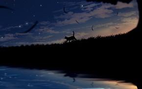 Picture field, cat, the sky, grass, cat, night