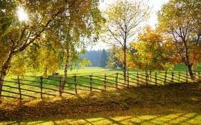Picture autumn, trees, the fence