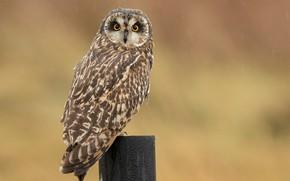 Picture snow, background, owl, bird, post, bokeh