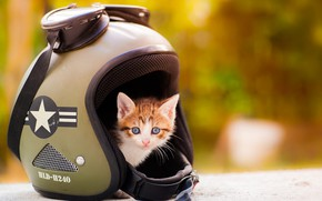 Picture cat, look, orange, yellow, kitty, background, baby, red, glasses, helmet, kitty, bokeh, baby