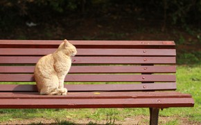 Picture cats, bench, red, sitting