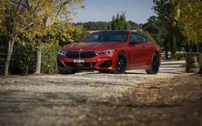 Picture road, coupe, plants, BMW, 2018, 8-Series, 2019, dark orange, M850i xDrive, Eight, G15