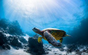 Picture sea, turtle, sea