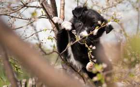 Picture look, flowers, branches, nature, pose, tree, black and white, the fence, dog, spring, garden, baby, …