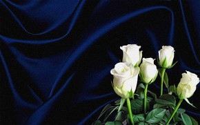 Picture flowers, the dark background, rendering, collage, figure, picture, canvas, white roses, the folds of the …