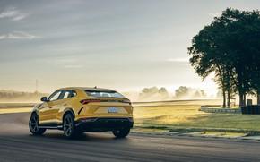 Picture Lamborghini, rear view, crossover, Urus, 2019