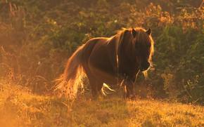Picture summer, grass, face, light, nature, fog, Rosa, horse, thickets, glade, vegetation, horse, morning, haze, walk, …