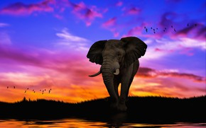 Picture the sky, sunset, rendering, elephant, art, photoart