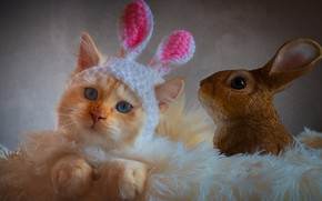 Picture cat, cat, look, kitty, hare, portrait, pile, fluffy, rabbit, red, image, pink, plaid, kitty, blue …