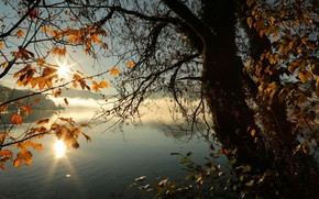 Picture autumn, leaves, the sun, rays, light, sunset, branches, fog, lake, pond, reflection, dawn, trunks, shore, …