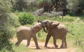 Picture nature, pose, the game, kids, elephants, cubs, elephant, elephants