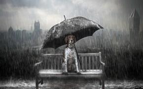 Picture rain, dog, umbrella, bench