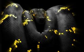 Picture Snake, Eyes, Head, Python, Art, Snake, Python, by Ben Judd, Ben Judd, Surreal Snake