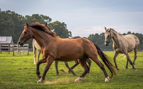 Picture horse, background, run