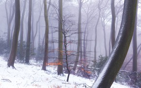Picture winter, forest, trees