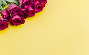 Picture bouquet, yellow background, red roses
