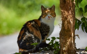 Picture cat, look, face, leaves, light, nature, pose, tree, sitting, bokeh, spotted, motley