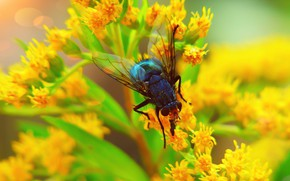 Picture summer, macro, flowers, fly, background, blur, yellow, insect, bokeh