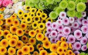 Picture flowers, yellow, green, orange, a lot, different, lilac, bouquets, cuts