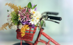 Picture flowers, bike, background
