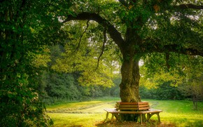 Picture summer, nature, tree, garden, benches