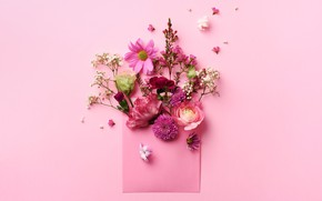 Picture flowers, background, the envelope