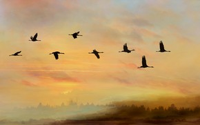 Picture the sky, flight, sunset, birds, pack, silhouettes, cranes