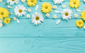 Picture flowers, chamomile, yellow, white, white, wood, blue, flowers, blue background, camomile