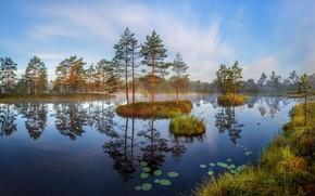Picture trees, landscape, lake