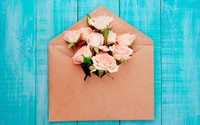 Picture background, roses, pink, the envelope