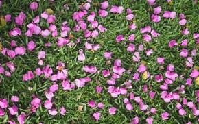 Picture grass, flowers, background, petals, grass, background, purple, petals, floral