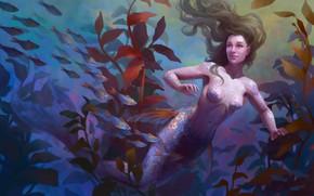 Picture Water, Fish, Mermaid, Hair, Underwater world, Tail, Algae