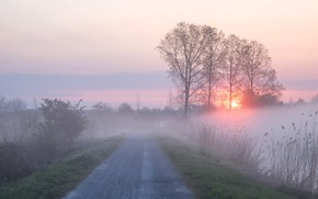 Picture road, the sky, grass, the sun, clouds, light, trees, fog, dawn, dal, morning, spikelets, haze, …