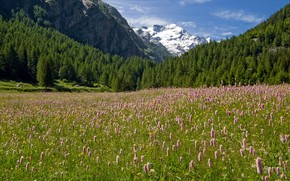 Picture forest, the sky, the sun, trees, flowers, mountains, meadow