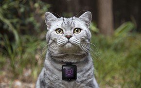 Picture concept, device, camera for cats, Whiskas, cat cameras, Catstacam, gadgets for cats, Whiskas