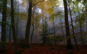 Picture autumn, forest, leaves, trees, branches, fog, Park, foliage, twilight