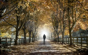 Picture autumn, life, street, people