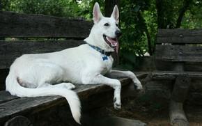 Picture dog, shop, white
