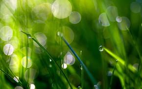 Picture greens, grass, the sun, Rosa, glare, background, bokeh