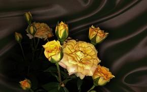Wallpaper flower, summer, nature, mood, rose, roses, beauty, rose, flower, beautiful, flowers, beautiful, beauty, harmony, cool, ...