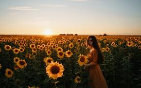 Picture field, summer, girl, sunflowers, sunset, mood, Alexei Chelnokov, Лиза Челнокова