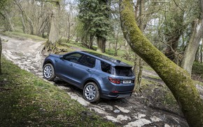 Picture forest, trees, stones, Land Rover, the rise, crossover, SUV, 2020, Discovery Sport