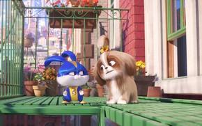 Picture flowers, rabbit, puppy, balcony, super hero, The secret life of Pets 2, The Secret Life …