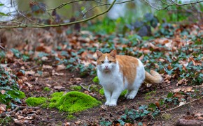 Picture cat, cat, branches, nature, foliage, moss, spring, red, walk