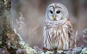 Picture look, background, tree, owl, bird, bark, owl