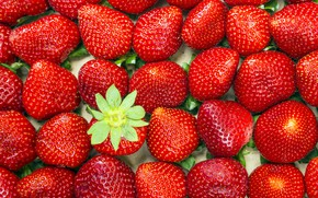 Picture berries, strawberry, placer, a lot