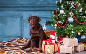 Picture decoration, balls, tree, dog, Christmas, gifts, New year, snowman, christmas, balls, dog, Labrador Retriever, labrador …